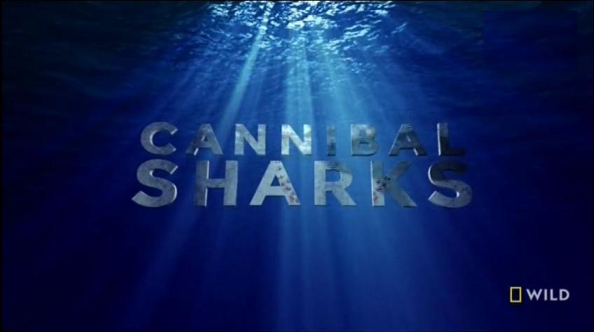 Kannibál cápák