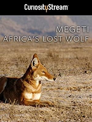 Megeti - Afrika elveszett farkasa