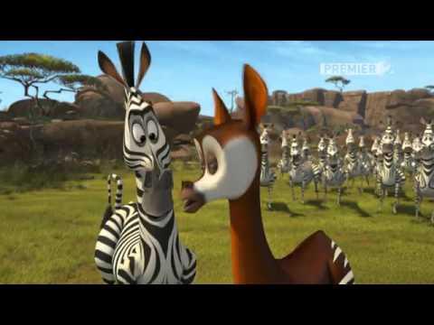 Madagaszkár: Állati szerelem