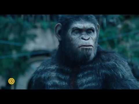 A majmok bolygója: Forradalom